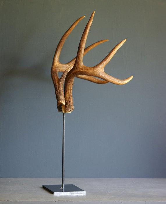 Deer Antlers on Industrial Stand