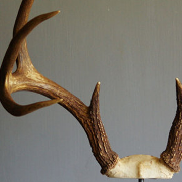 Deer Antlers on Industrial Stand